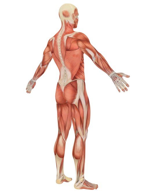 Most patients with acute lateral epicondylitis recover without physical therapy and steroid injections.