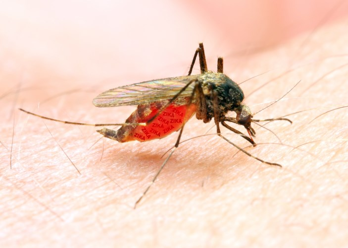The most common symptoms of the disease are fever, rash, pain, and red eyes.
