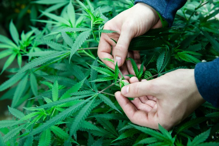 Pot-related poison control calls and hospital discharges spike with wider availability.