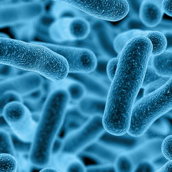 Gut microbiome diversity is significantly lower in patients with chronic pelvic pain syndrome.