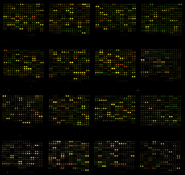 Microarray analyses were performed to investigate molecular changes associated with pain behaviors.