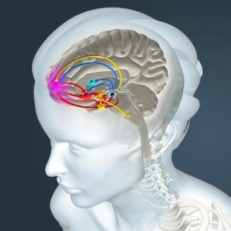 How THC Affects the Dopamine System