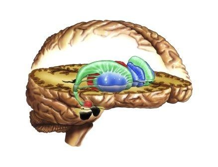 Dopamine Release Reduced During Acute Migraine
