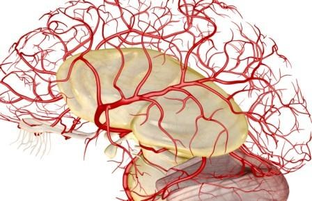 Finding the Link Between Migraine and Cerebral Blood Flow