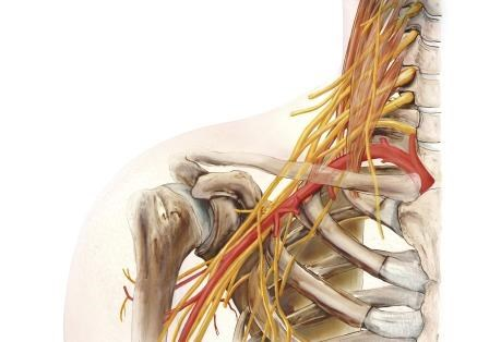 Low-Dose Perineural Dexamethasone Prolongs Effects of Brachial Plexus Nerve Block