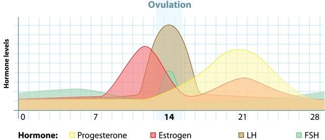 Estrogen decline confers vulnerability to migraines
