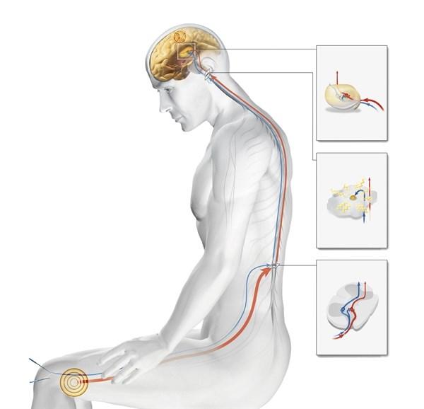 Psychophysical Responses in Acupuncture vs Sham Laser