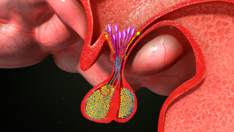 During the neonatal period, injury may lead to altered dorsal horn neuron development.