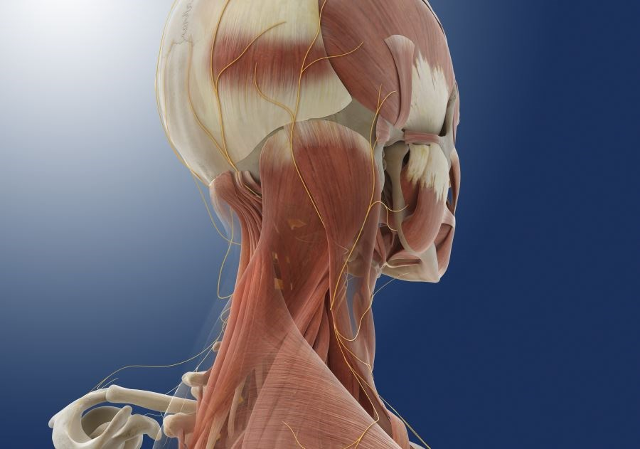 Greater Occipital Nerve Block Potentially Effective for Acute Migraines
