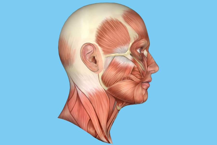 Healthy individuals received 2 injections of nerve growth factor or isotonic saline in the left or right masseter and temporalis muscles.