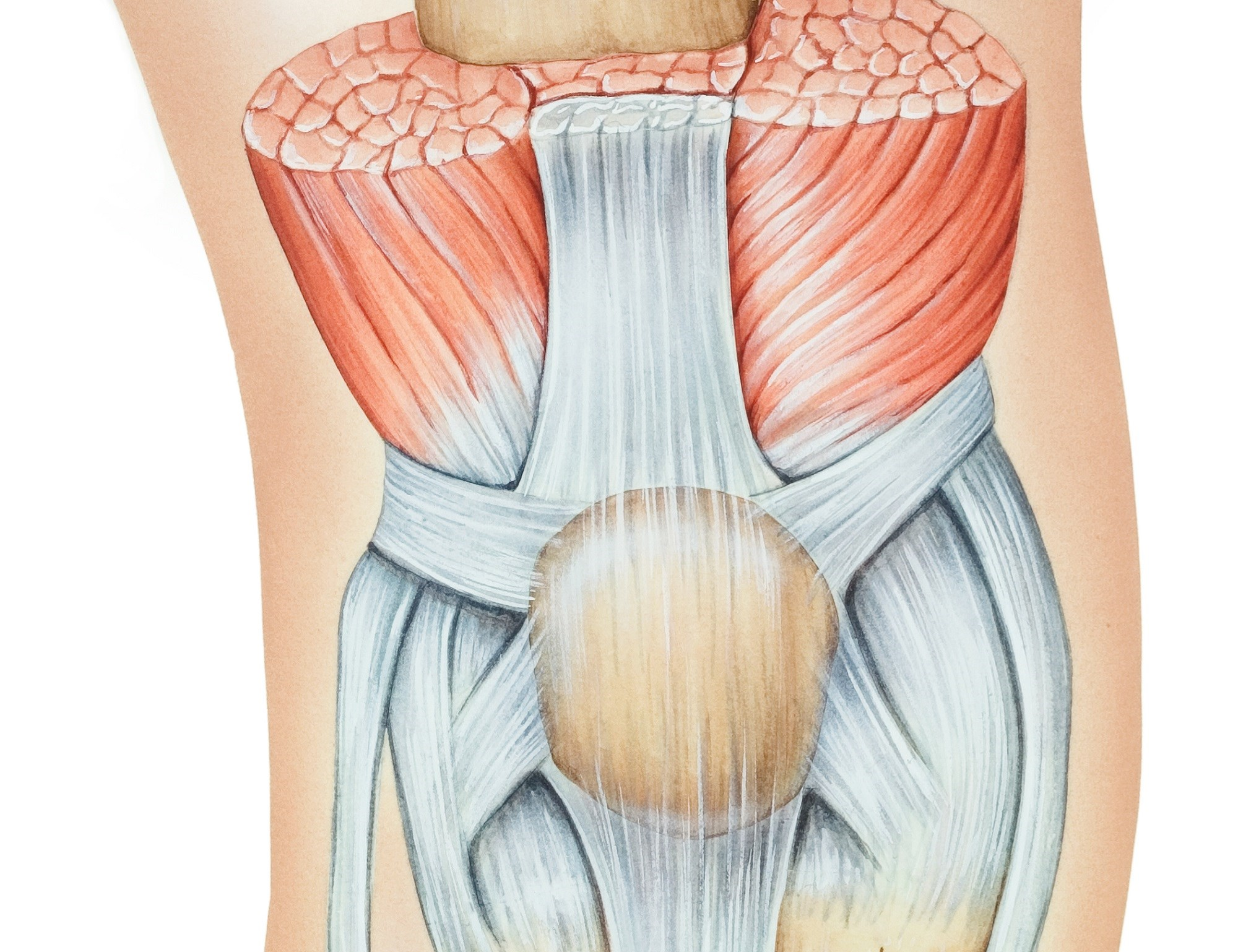 Pain Processing May Be Altered in Women With Patellofemoral Pain